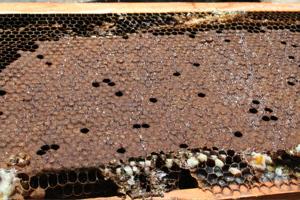 蜂蜜とれました_c0123523_1893247.jpg