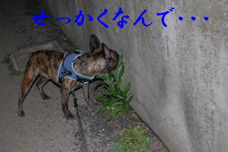 c0130324_0394323.jpg