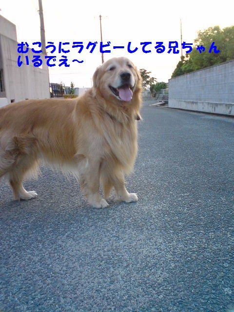 b0127531_19543262.jpg