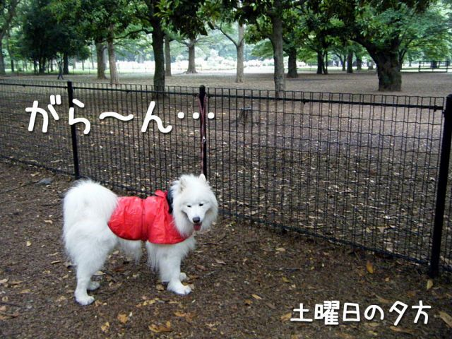 どんぶら公園_c0062832_1645439.jpg