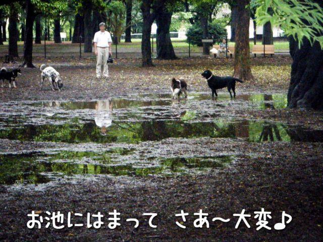 どんぶら公園_c0062832_16454991.jpg