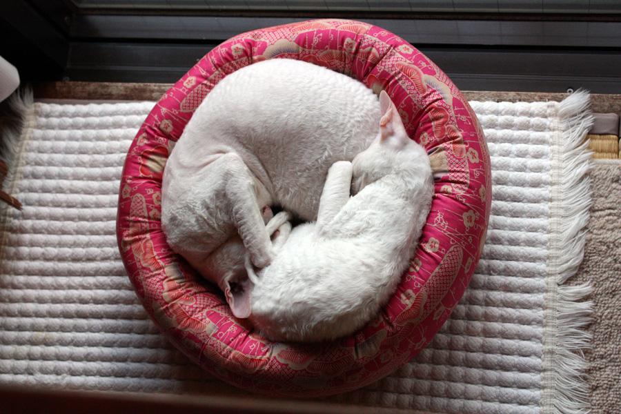 サミュエルさんの猫ベット_e0048332_161068.jpg