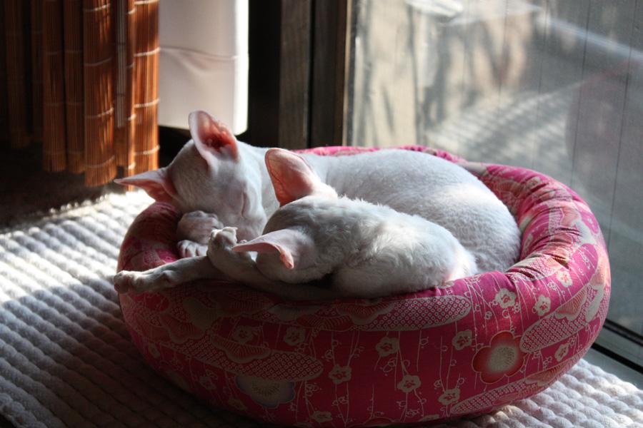 サミュエルさんの猫ベット_e0048332_2281615.jpg