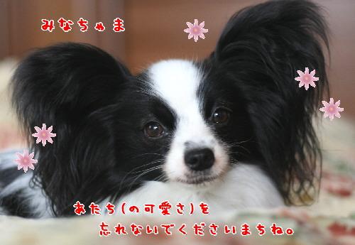 d0013149_8143469.jpg