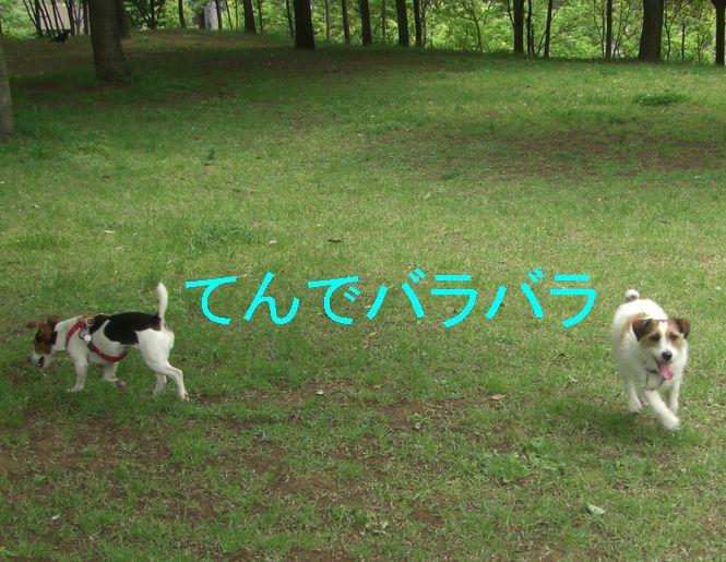 f0053952_20102168.jpg
