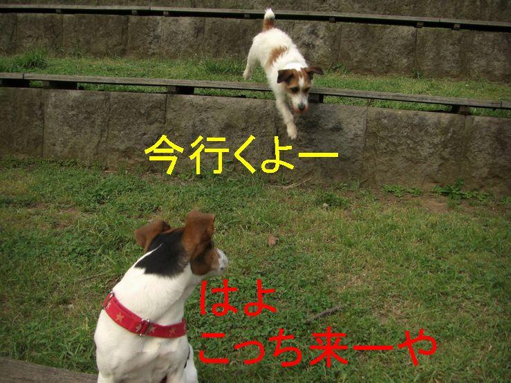 f0053952_20142130.jpg