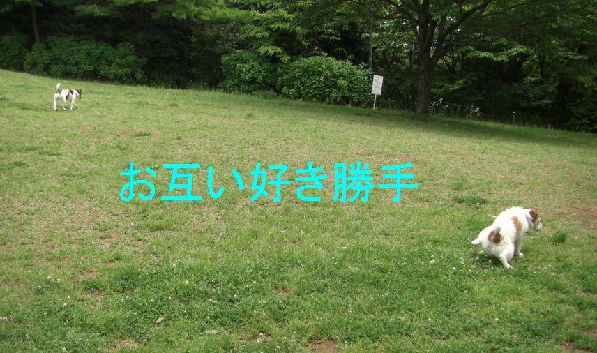 f0053952_2065865.jpg