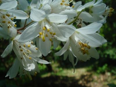 定例活動日…卯の花が真っ盛り_c0108460_18254174.jpg