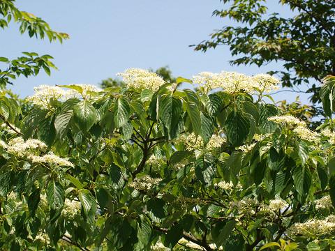 山頂の花々_b0135573_19351331.jpg