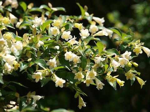 山頂の花々_b0135573_19352777.jpg
