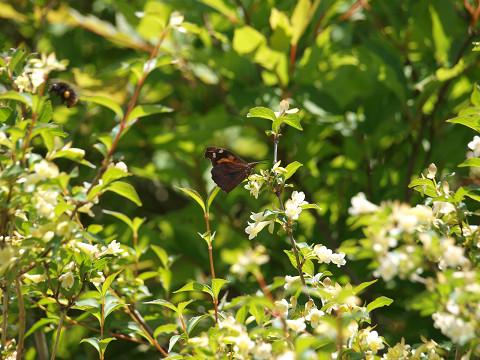 山頂の花々_b0135573_19355571.jpg