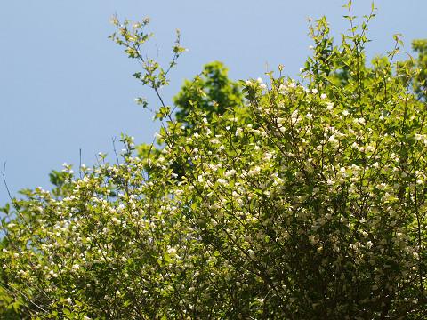 山頂の花々_b0135573_19363812.jpg