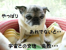 c0139488_1618272.jpg