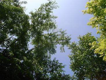 緑陰午睡的幻想_d0087595_22115765.jpg