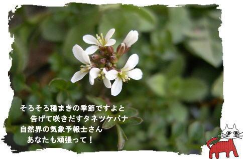 f0137096_1233611.jpg