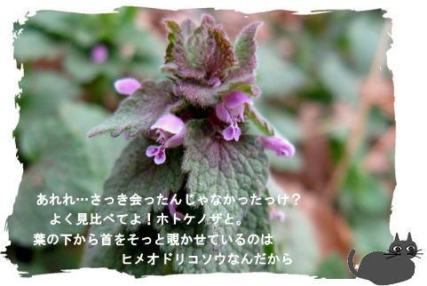 f0137096_12412613.jpg