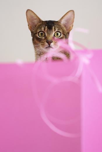 [猫的]桃の間_e0090124_8125416.jpg