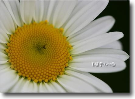 f0111147_21321350.jpg