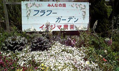 花摘み野菜摘み☆_d0025559_1154219.jpg