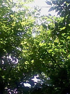 新緑とそよ風_f0015517_10494334.jpg