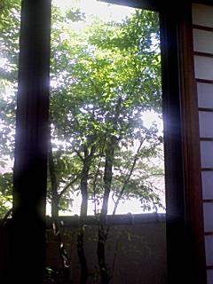 新緑とそよ風_f0015517_10494351.jpg