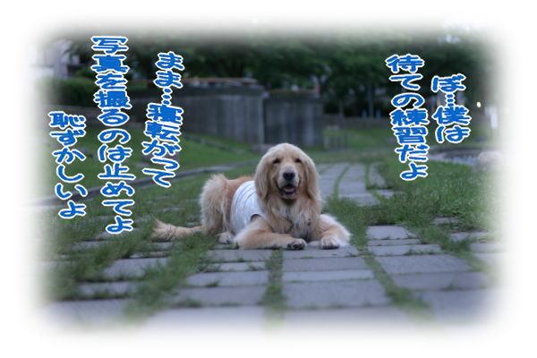 f0109418_0385566.jpg