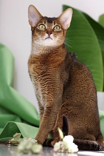 [猫的]緑の間_e0090124_8144717.jpg