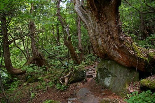 原生林探勝路と大滝_d0102327_1054.jpg