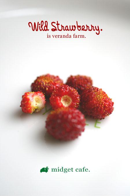 ワイルドストロベリー収穫で 【ベランダ菜園】