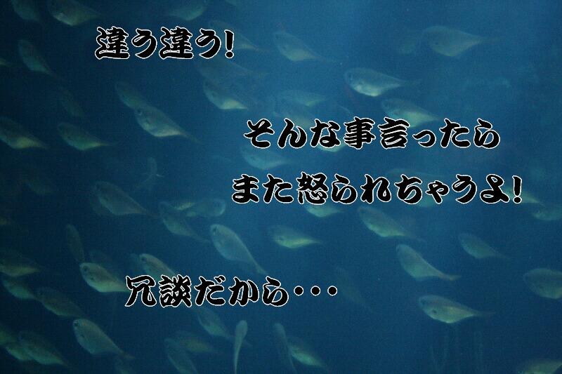 b0110348_22234391.jpg
