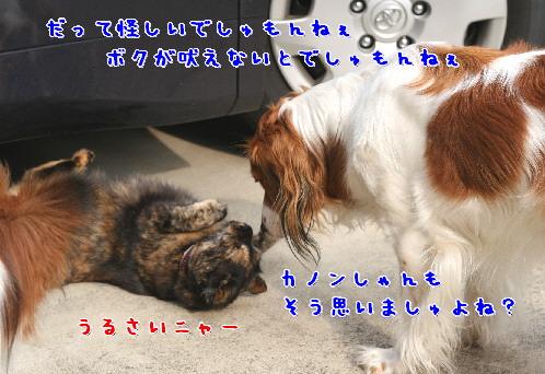 d0013149_1022166.jpg