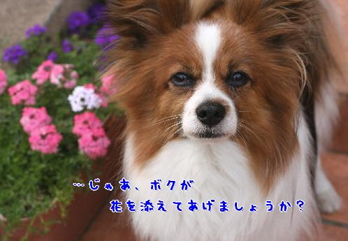 d0013149_9353073.jpg