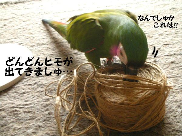 f0132055_8511698.jpg