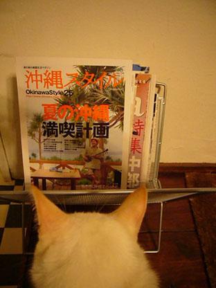 okinawa style._c0153966_20345046.jpg