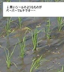 e0041168_9563235.jpg