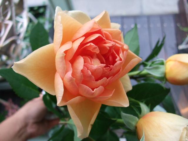 オークリーフ花の教室(川嶋さんの作品)_f0049672_13143344.jpg