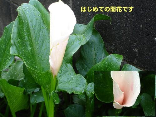 f0003174_15194372.jpg