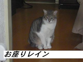 b0112380_1950117.jpg