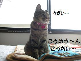 c0139488_1573490.jpg