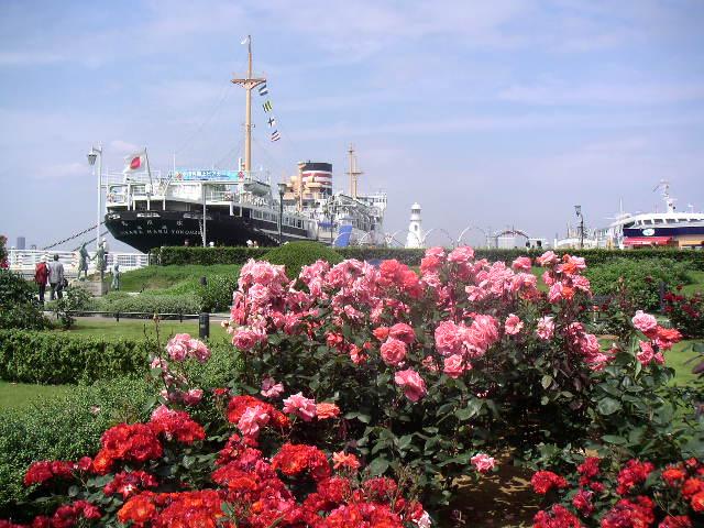 横浜散歩のおすすめスポット その2 【山下公園】_e0146912_1736855.jpg