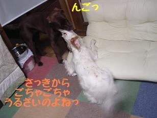 b0113725_14505554.jpg