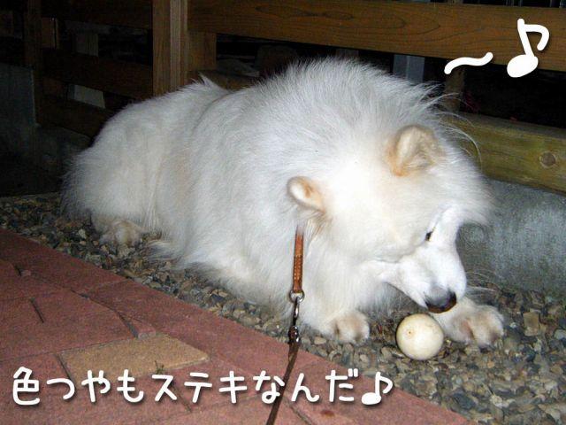 ボールみっけ!_c0062832_19322356.jpg