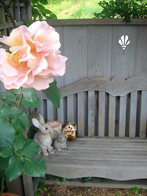 初夏の庭_e0086738_8293387.jpg