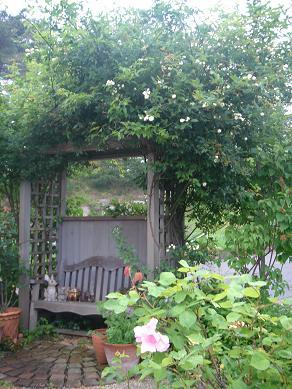初夏の庭_e0086738_8305652.jpg