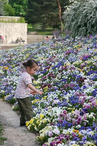 弟をお花で飾ろう?!_c0024345_7441964.jpg