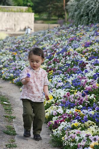 弟をお花で飾ろう?!_c0024345_7445592.jpg