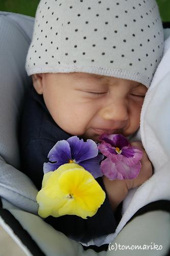 弟をお花で飾ろう?!_c0024345_745865.jpg
