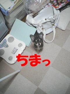 b0122046_10193593.jpg