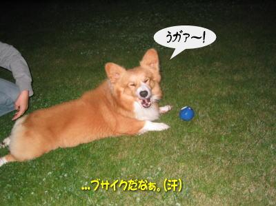 b0105157_200946.jpg