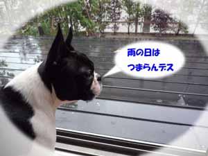 f0166359_1491366.jpg